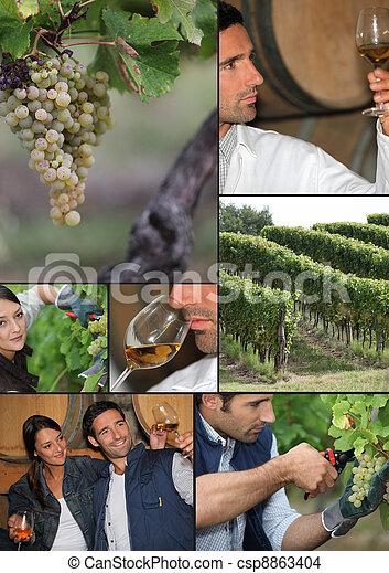 Viticulture - csp8863404