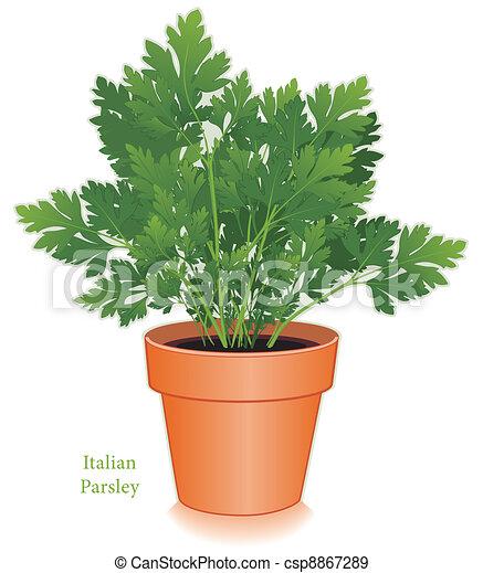 vecteurs eps de aromate pot fleurs persil italien italien ou plat csp8867289