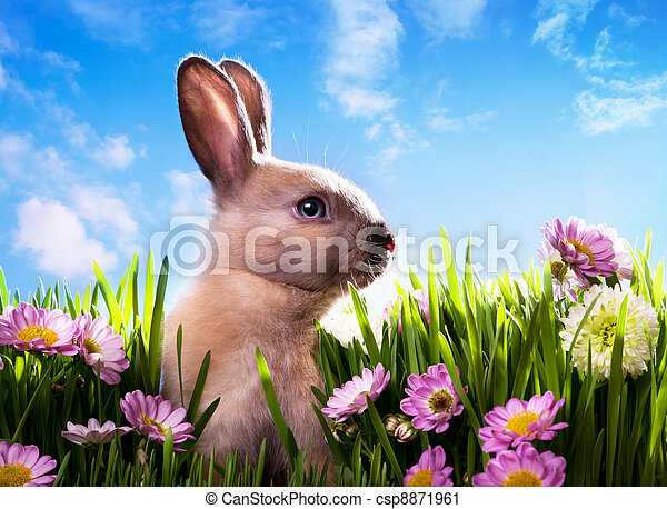 art baby Easter bunny on spring gre - csp8871961