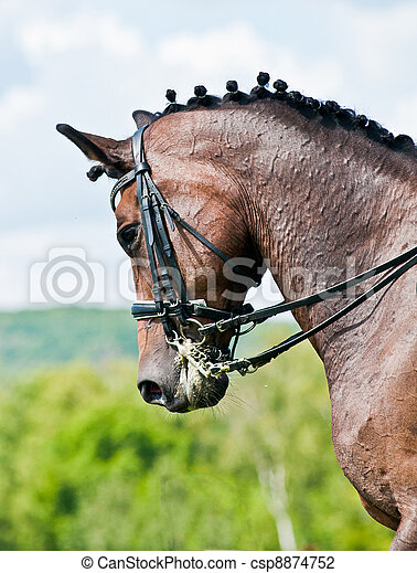 Beautiful sport dressage horse - csp8874752
