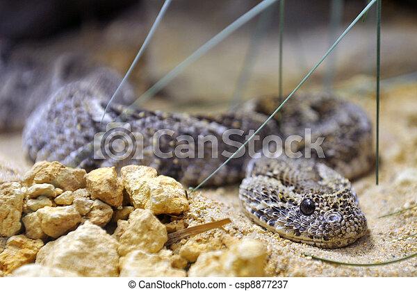 Pit viper - csp8877237