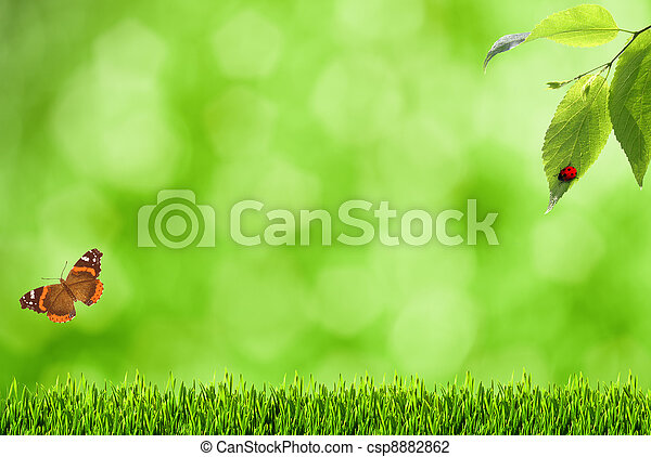 Summer backgrounds with blurry bokeh, grass and butterfly - csp8882862