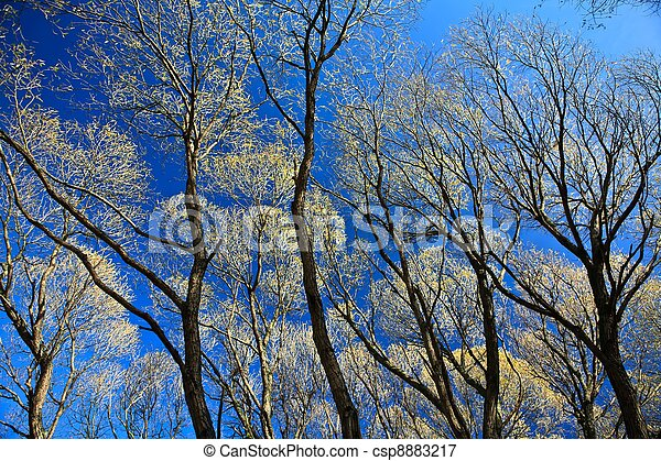 Tree branches and blue sky - csp8883217
