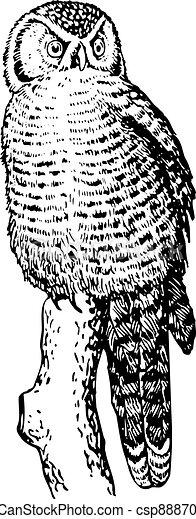 Hawk owl (Surnia ulula) - csp8887097