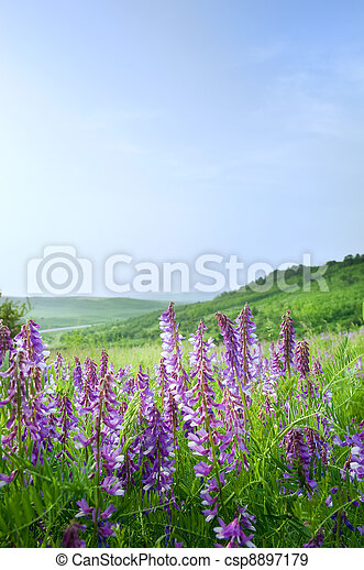 Beautiful rural landscape - csp8897179