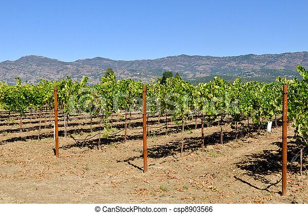 Napa Valley California Vineyard Travel Destination - csp8903566