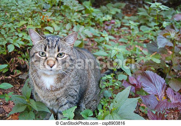 Cat in Greenery - csp8903816