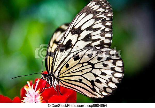 photo de papier cerf volant papillon riz papier ou. Black Bedroom Furniture Sets. Home Design Ideas