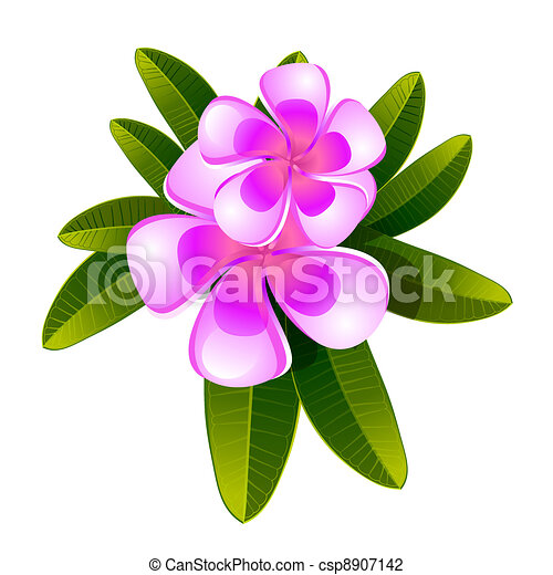 Plumeria Flower Line Drawing Frangipani flower isolated -