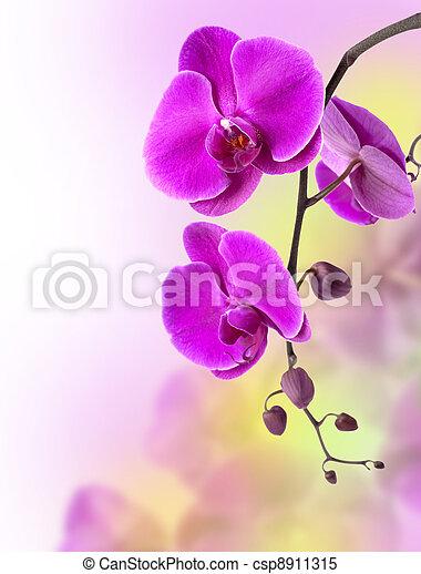 库存照片-紫色, 兰花
