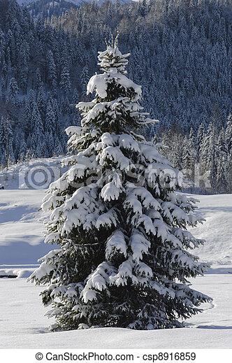 single fir tree in winter - csp8916859