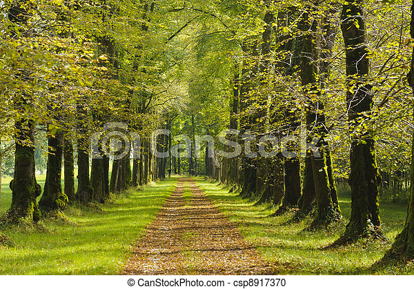 tree alley in summer with footpath - csp8917370