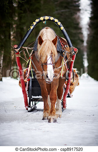 The horse harnessed in sledge - csp8917520