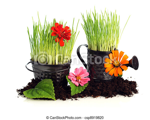 Watering can with grass & flowers - csp8919820
