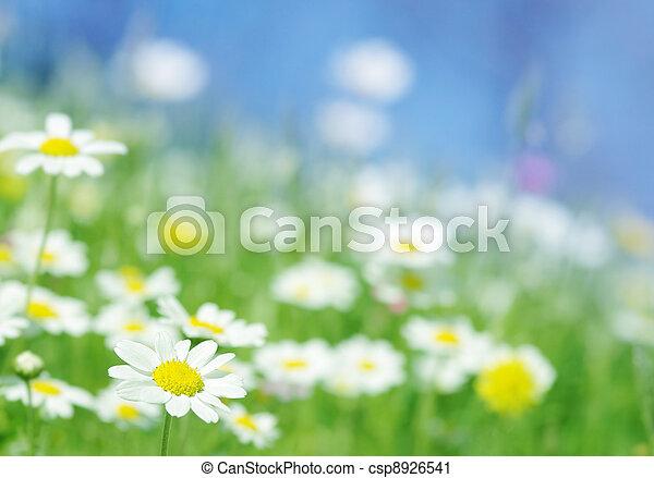 primavera, flores - csp8926541