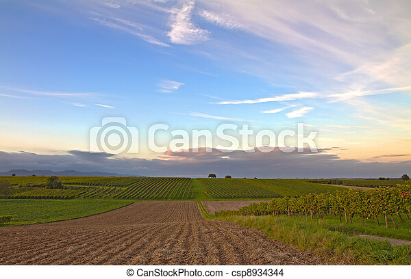 Vineyards at dusk in Pfalz, Germany - csp8934344