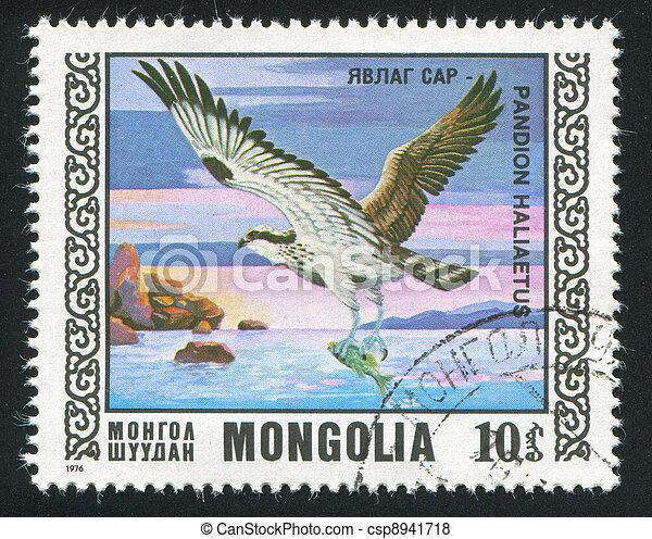 quebrantahuesos, pájaro - csp8941718