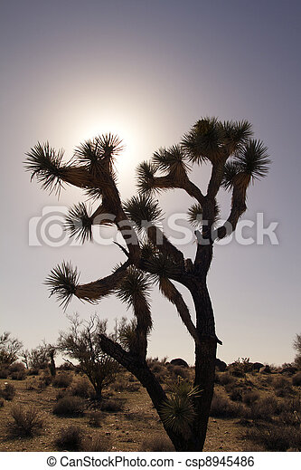 Joshua Tree in Sunset - csp8945486