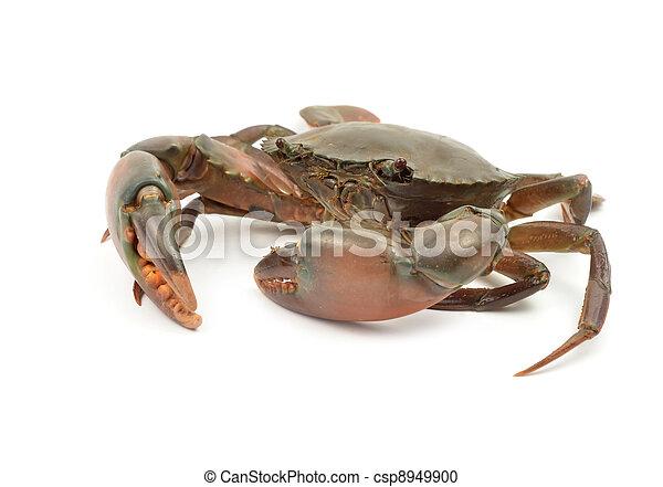 crab isolated  - csp8949900