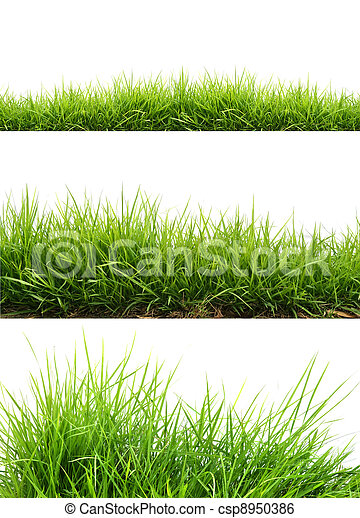 fresh spring green grass - csp8950386