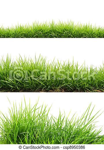fresh spring green grass - csp8950386