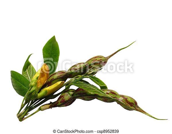 tropical green pea (Cajanus cajan) - csp8952839