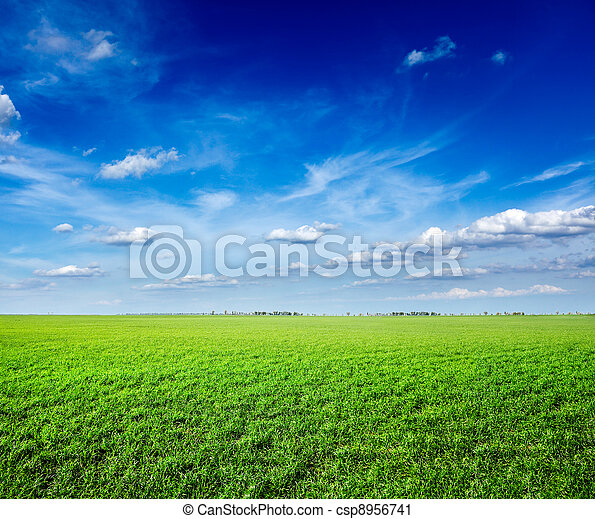 Field of green fresh grass under blue sky - csp8956741