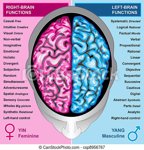 Human brain left and right function - csp8956767