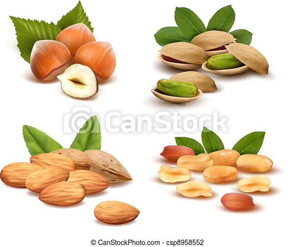 Big collection of ripe nuts  Vector - csp8958552