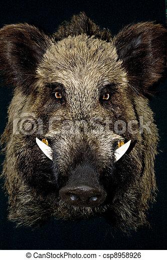wild boar - csp8958926