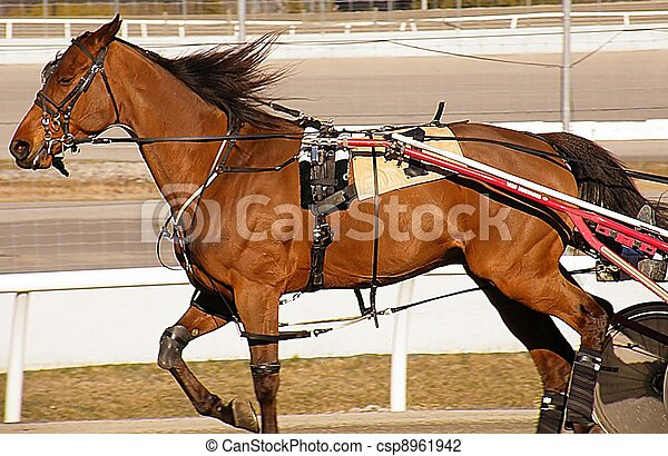 The Brown Pacer at the Races - csp8961942
