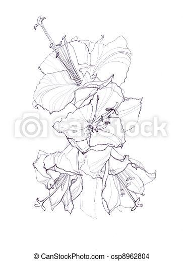 Dessin de hibiscus fleur main dessin sur blanc fond - Fleur d hibiscus dessin ...
