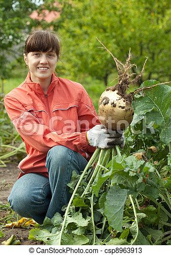 woman harvesting rutab...