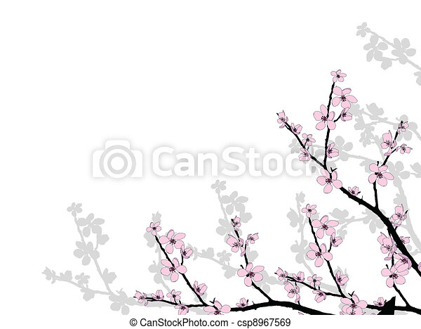 Branch of beautiful cherry blossom  - csp8967569