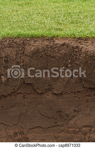 Trimmed Grass over exposed soil - csp8971033