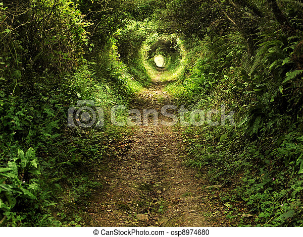 Enchanted tunnel path in the forest - csp8974680
