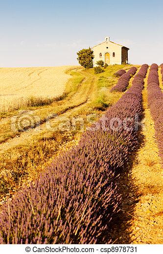 chapel with lavender and grain fields, Plateau de Valensole, Provence, France - csp8978731