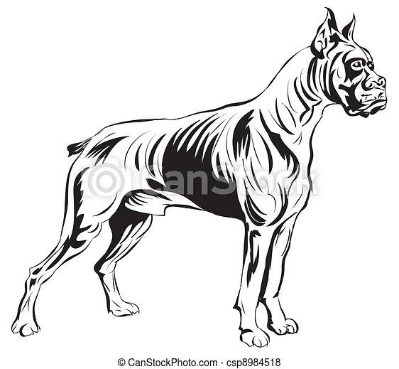 Stock illustration von boxer hund bereit f r dein design arbeit csp8984518 suchen sie - Boxer chien dessin ...