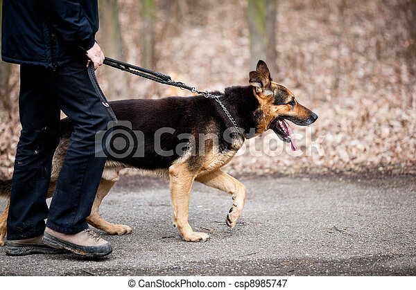 Master and his obedient (German Shepherd) dog - csp8985747