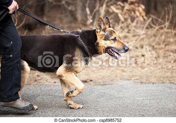 Master and his obedient (German Shepherd) dog - csp8985752