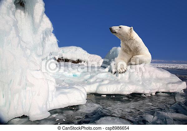 stehende,  Polar,  Block, bär, eis - csp8986654