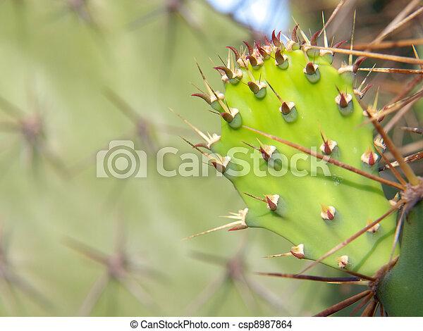 Opuntia cactus - csp8987864