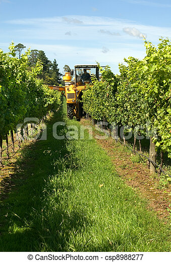 Harvesting Grapes - csp8988277