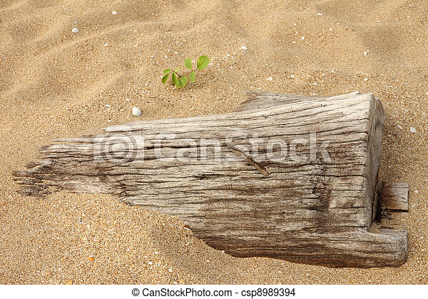 Dead wood sink in sand and small new one.