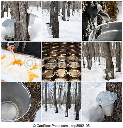 Maple syrup production - csp8992105