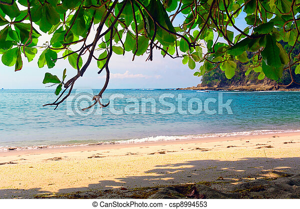 Paradise beach - csp8994553