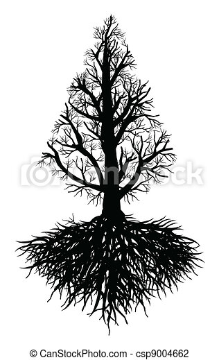 old tree root - csp9004662