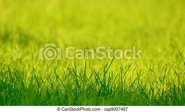 Fresh spring green grass in sunlight - csp9007497