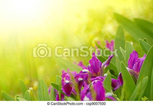 Spring Flowers in the Bright Sunlight - csp9007500