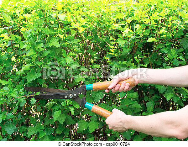 Hands are cut bush clippers - csp9010724